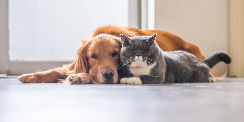 A Cat and a dog taking a nap