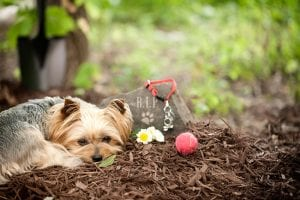 Four Questions and Answers About Pet Memorials