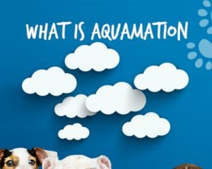 What is Aquamation? [infographic]